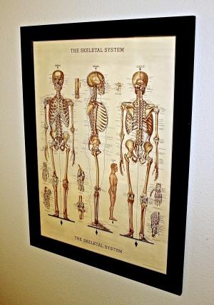 Chart of skeletal system at Juniper Chiropractic